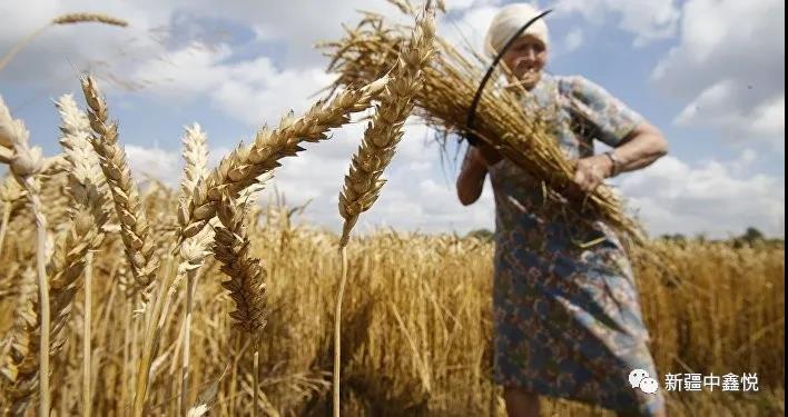 俄罗斯农业领域用工需求将越来越大